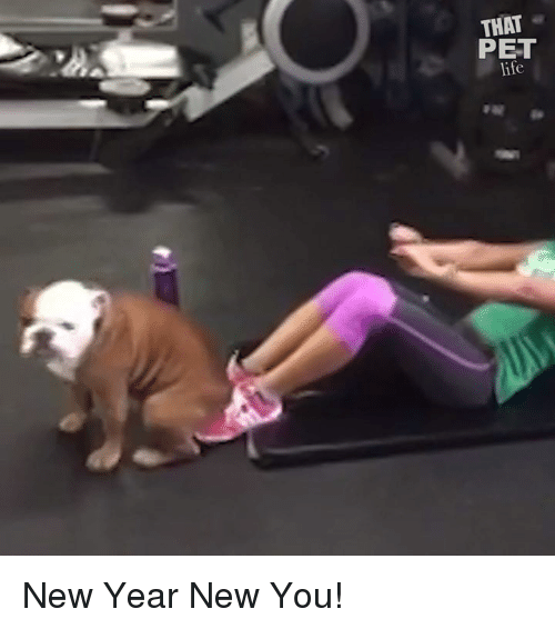 Life, Memes, and New Year's: THAT  PET  life New Year New You!