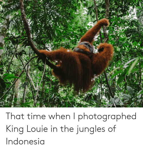 Jungles: That time when I photographed King Louie in the jungles of Indonesia
