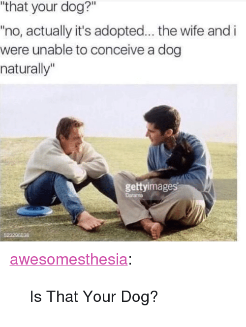 "Tumblr, Blog, and Http: ""that your dog?""  no, actually it's adopted... the wife and i  were unable to conceive a dog  naturally""  gettyimag <p><a href=""http://awesomesthesia.tumblr.com/post/173732081115/is-that-your-dog"" class=""tumblr_blog"">awesomesthesia</a>:</p>  <blockquote><p>Is That Your Dog?</p></blockquote>"