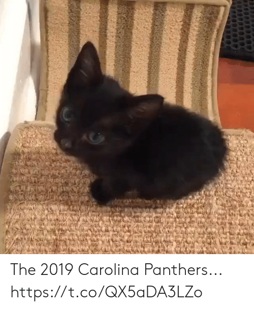 carolina: The 2019 Carolina Panthers... https://t.co/QX5aDA3LZo