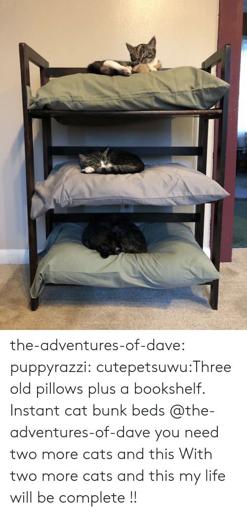 dave: the-adventures-of-dave:  puppyrazzi:  cutepetsuwu:Three old pillows plus a bookshelf. Instant cat bunk beds  @the-adventures-of-dave you need two more cats and this  With two more cats and this my life will be complete !!