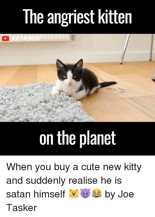 Angriest: The angriest kitten  UOETASKER  on the planet When you buy a cute new kitty and suddenly realise he is satan himself 🐱😈😂  by Joe Tasker