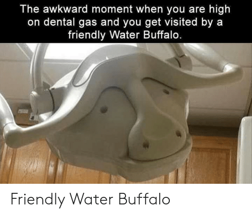 Buffalo: The awkward moment when you are high  on dental gas and you get visited by a  friendly Water Buffalo. Friendly Water Buffalo