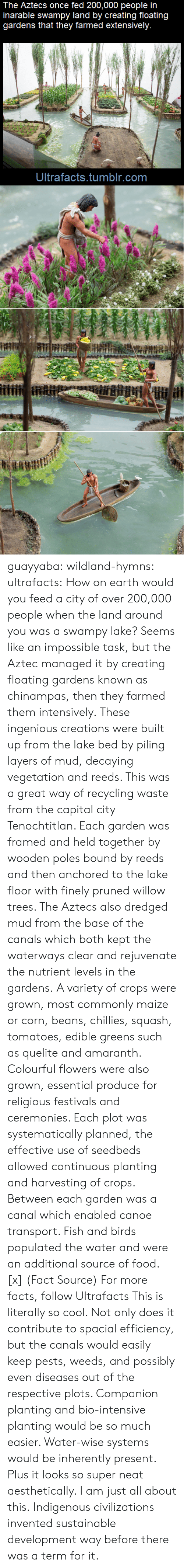 Inherently: The Aztecs once fed 200,000 people in  inarable swampy land by creating floating  gardens that they farmed extensively.  Ultrafacts.tumblr.com guayyaba: wildland-hymns:  ultrafacts:  How on earth would you feed a city of over 200,000 people when the land around you was a swampy lake? Seems like an impossible task, but the Aztec managed it by creating floating gardens known as chinampas, then they farmed them intensively. These ingenious creations were built up from the lake bed by piling layers of mud, decaying vegetation and reeds. This was a great way of recycling waste from the capital city Tenochtitlan. Each garden was framed and held together by wooden poles bound by reeds and then anchored to the lake floor with finely pruned willow trees. The Aztecs also dredged mud from the base of the canals which both kept the waterways clear and rejuvenate the nutrient levels in the gardens. A variety of crops were grown, most commonly maize or corn, beans, chillies, squash, tomatoes, edible greens such as quelite and amaranth. Colourful flowers were also grown, essential produce for religious festivals and ceremonies. Each plot was systematically planned, the effective use of seedbeds allowed continuous planting and harvesting of crops. Between each garden was a canal which enabled canoe transport. Fish and birds populated the water and were an additional source of food. [x] (Fact Source) For more facts, follow Ultrafacts   This is literally so cool. Not only does it contribute to spacial efficiency, but the canals would easily keep pests, weeds, and possibly even diseases out of the respective plots. Companion planting and bio-intensive planting would be so much easier. Water-wise systems would be inherently present. Plus it looks so super neat aesthetically. I am just all about this.   Indigenous civilizations invented sustainable development way before there was a term for it.