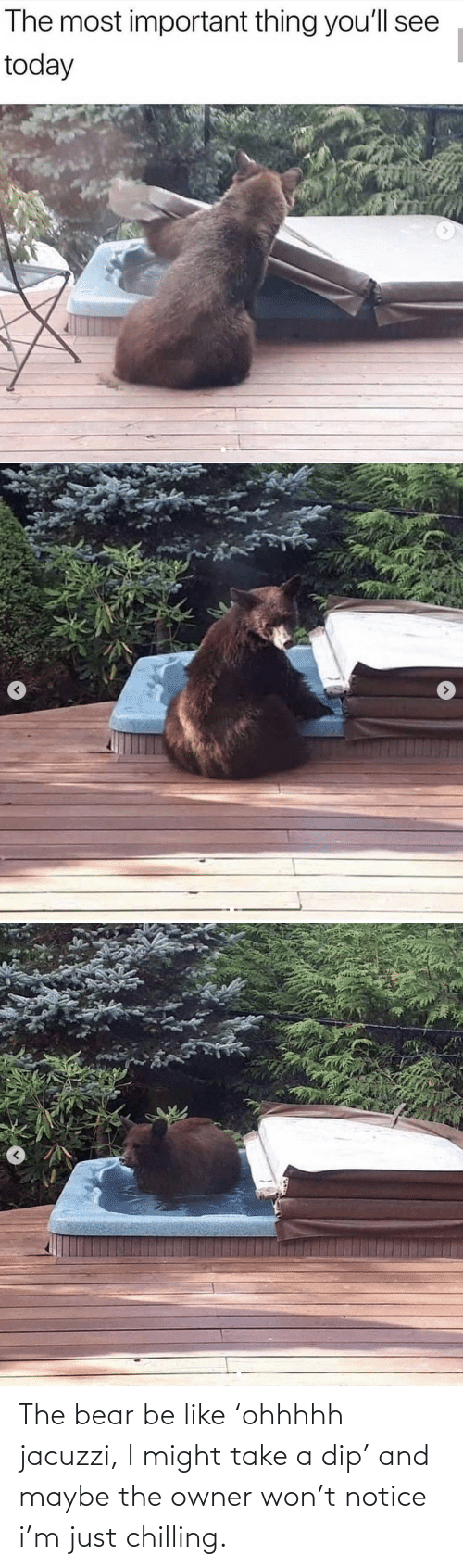chilling: The bear be like 'ohhhhh jacuzzi, I might take a dip' and maybe the owner won't notice i'm just chilling.