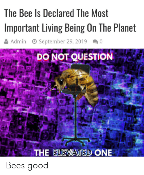 september: The Bee Is Declared The Most  Important Living Being On The Planet  Admin  September 29, 2019  0  DO NOT QUESTION  THE ELEVATED ONE Bees good