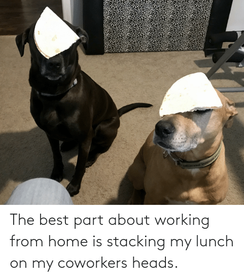 Coworkers: The best part about working from home is stacking my lunch on my coworkers heads.