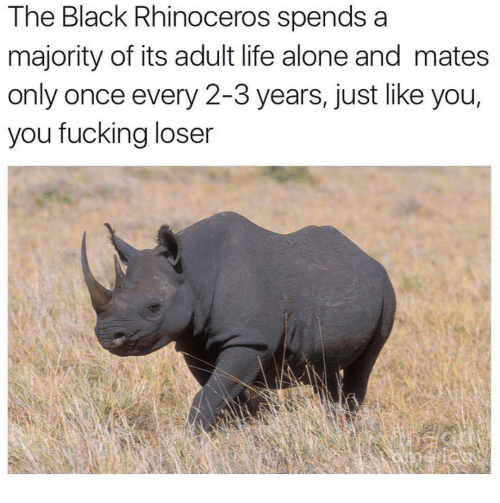 Adult Life: The Black Rhinoceros spends a  majority of its adult life alone and mates  only once every 2-3 years, just like you,  you fucking loser