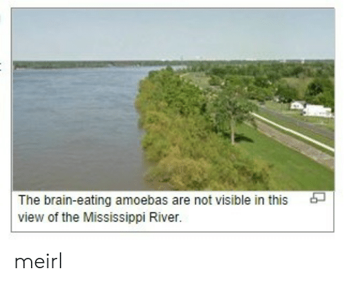 Mississippi: The brain-eating amoebas are not visible in this  view of the Mississippi River. meirl