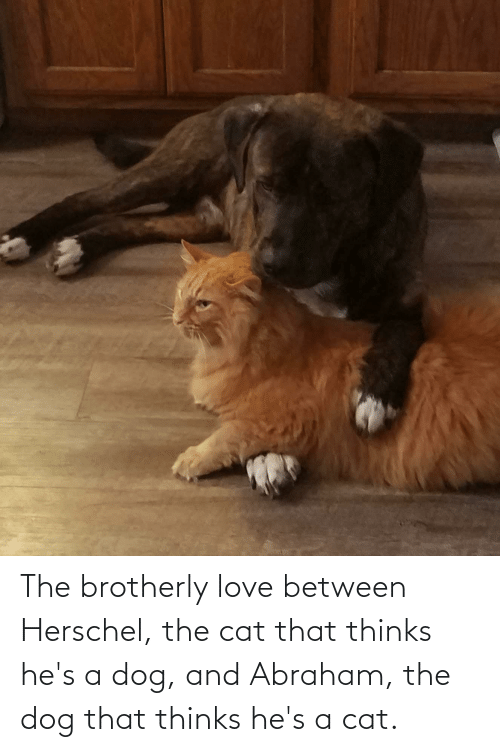 Abraham: The brotherly love between Herschel, the cat that thinks he's a dog, and Abraham, the dog that thinks he's a cat.
