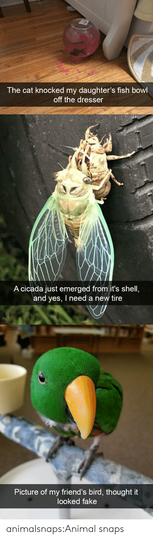 Fake, Friends, and Target: The cat knocked my daughter's fish bowl  off the dresser   A cicada just emerged from it's shell  and yes, I need a new tire   Picture of my friend's bird, thought it  looked fake animalsnaps:Animal snaps