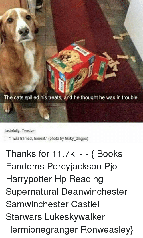 tastefully offensive: The cats spilled his treats, and he thought he was in trouble.  tastefully offensive:  l was framed, honest. (photo by frisky dingos) Thanks for 11.7k ● - - { Books Fandoms Percyjackson Pjo Harrypotter Hp Reading Supernatural Deanwinchester Samwinchester Castiel Starwars Lukeskywalker Hermionegranger Ronweasley}
