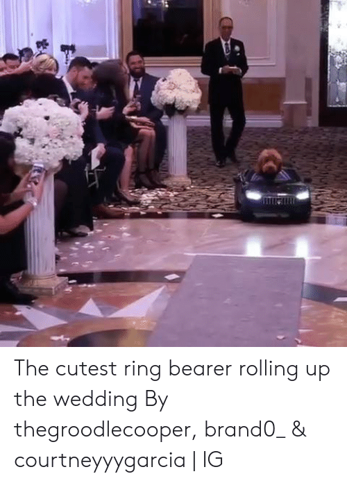 bearer: The cutest ring bearer rolling up the wedding  By thegroodlecooper, brand0_ & courtneyyygarcia   IG