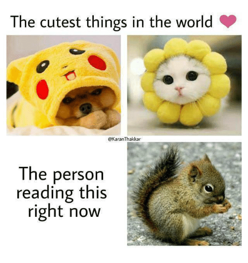 this-right-now: The cutest things in the world  @KaranThakkar  The person  reading this  right now