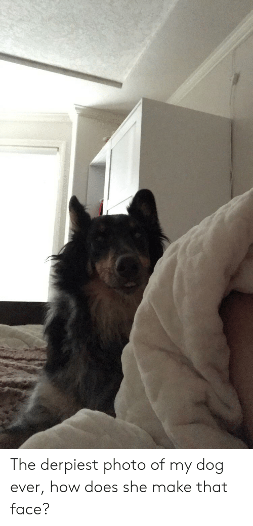 How, Dog, and Photo: The derpiest photo of my dog ever, how does she make that face?