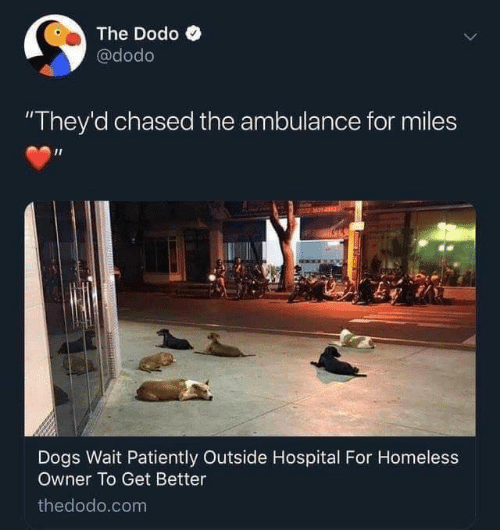 """Dogs, Homeless, and Hospital: The Dodo  @dodo  """"They'd chased the ambulance for miles  M14153  Dogs Wait Patiently Outside Hospital For Homeless  Owner To Get Better  thedodo.com"""
