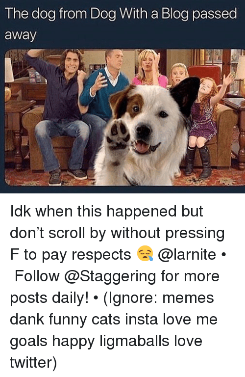 Cats, Dank, and Funny: The dog from Dog With a Blog passed  away Idk when this happened but don't scroll by without pressing F to pay respects 😪 @larnite • ➫➫➫ Follow @Staggering for more posts daily! • (Ignore: memes dank funny cats insta love me goals happy ligmaballs love twitter)