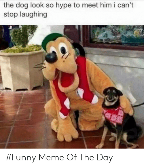 stop laughing: the dog look so hype to meet him i can't  stop laughing #Funny Meme Of The Day