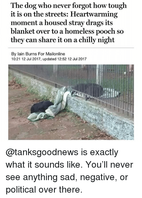 pooch: The dog who never forgot how tough  it is on the streets: Heartwarming  moment a housed stray drags its  blanket over to a homeless pooch so  they can share it on a chilly night  By lain Burns For Mailonline  10:21 12 Jul 2017, updated 12:52 12 Jul 2017 @tanksgoodnews is exactly what it sounds like. You'll never see anything sad, negative, or political over there.