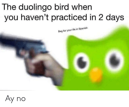 When You Havent: The duolingo bird when  you haven't practiced in 2 days  Beg for your life in Spanish Ay no