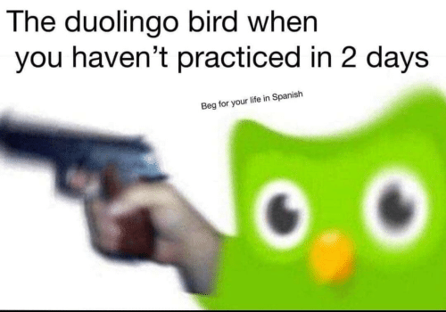 When You Havent: The duolingo bird when  you haven't practiced in 2 days  Beg for your life in Spanish