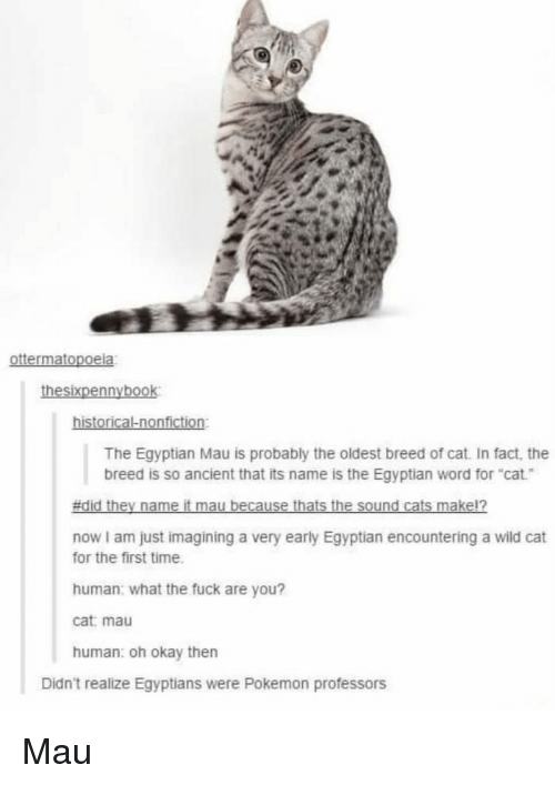 """mau: The Egyptian Mau is probably the oldest breed of cat. In fact, the  breed is so ancient that its name is the Egyptian word for """"cat  now I am just imagining a very early Egyptian encountering a wild cat  for the first time  human: what the fuck are you?  cat: mau  human: oh okay then  Didn't realize Egyptians were Pokemon professors Mau"""