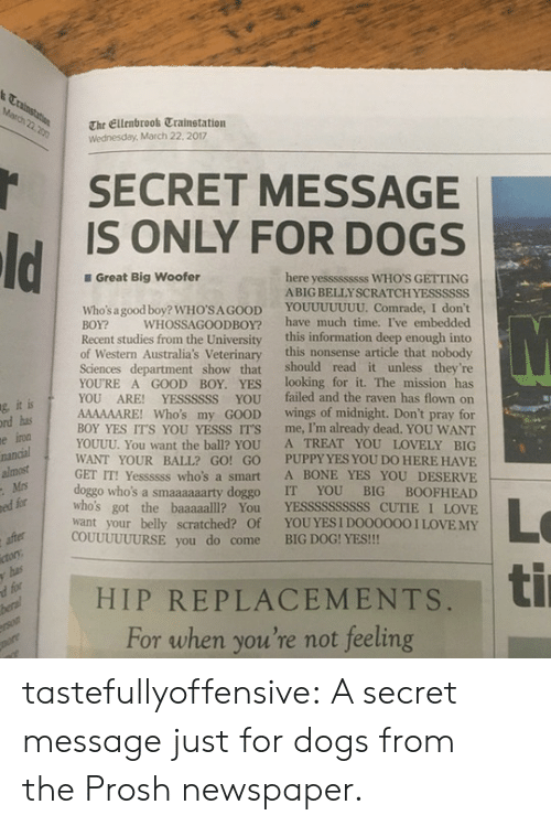 Dogs, Love, and Target: The Ellenbrook Trainstation  Wednesday, March 22. 2017  SECRET MESSAGE  IS ONLY FOR DOGS  Great Big Woofer  here yesssssssss WHO'S GETTING  ABIG BELLYSCRATCHYESSSSSS  Who's a good boy? WHO'SA GOOD YOUUUUUUU. Comrade, I don't  BOY? WHOSSAGOODBOY? have much time. I've embedded  Recent studies from the University this information deep enough into  of Western Australia's Veterinary this nonsense article that nobody  Sciences department show that should read it unless they're  YOURE A GOOD BOY. YES looking for it. The mission has  YOU ARE! YESSSSSS YOU failed and the raven has flown on  AAAAAARE! Who's my GOOD wings of midnight. Don't pray for  BOY YES IT'S YOU YESSS IT'S me, I'm already dead. YOU WANT  YOUUU. You want the ball? YOU A TREAT YOU LOVELY BIG  WANT YOUR BALL? GO! GO PUPPY YES YOU DO HERE HAVIE  GET IT! Yessssss who's a smart A BONE YES YOU DESERVE  doggo who's a smaaaaaarty doggo IT YOU BIG BOOFHEAD  who's got the baaaaalll? You YESSSSSSSSSS CUTIE I LOVE  want your belly scratched? Of YOUYES I DOO0000 I LOVEMY  ic  g, it  rd has  ed for  COUUUUUURSE you do come BIG DOG! YES!!!  | HIP REPLACEMENTS, ti  d for  For when you're not feeling tastefullyoffensive: A secret message just for dogs from theProshnewspaper.