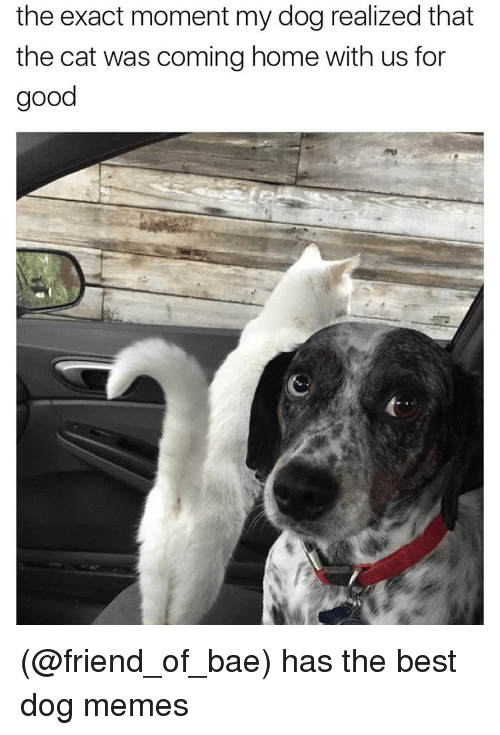 Dog Meme: the exact moment my dog realized that  the cat was coming home with us for  good (@friend_of_bae) has the best dog memes