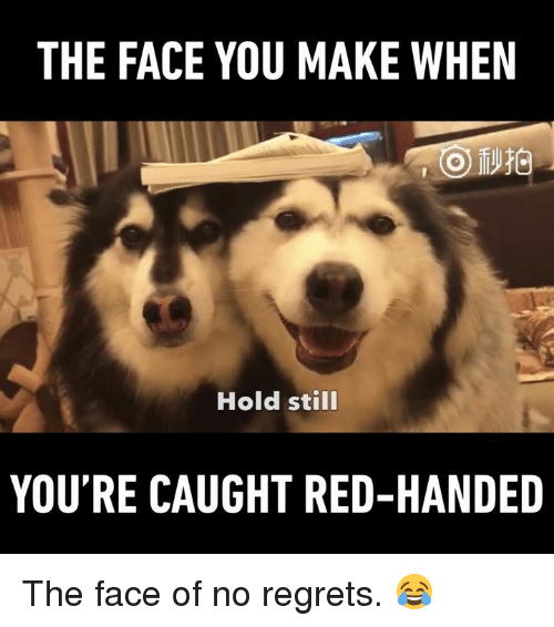 no regret: THE FACE YOU MAKE WHEN  Hold still  YOU'RE CAUGHT RED-HANDED The face of no regrets. 😂