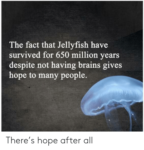 brains: The fact that Jellyfish have  survived for 650 million years  despite not having brains gives  hope to many people. There's hope after all