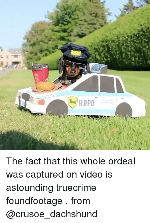dachshunds: The fact that this whole ordeal was captured on video is astounding truecrime foundfootage . from @crusoe_dachshund