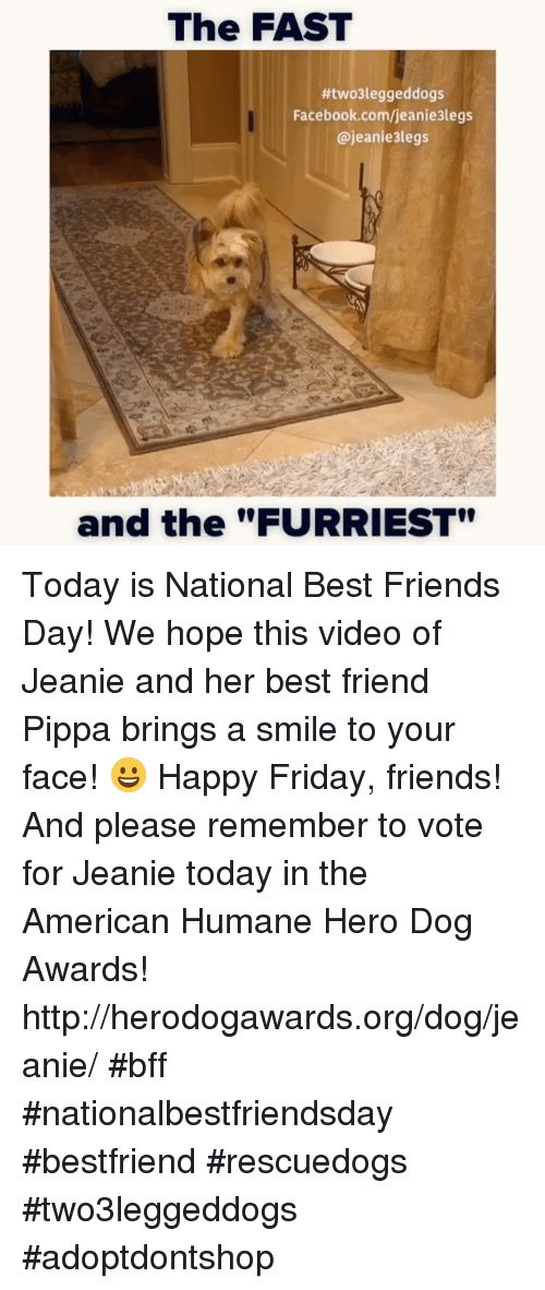 "best friends day: The FAST  #twoleggeddogs  Facebook.com/jeanie3legs  @jeanie3legs  and the""FURRIEST"" Today is National Best Friends Day! We hope this video of Jeanie and her best friend Pippa brings a smile to your face! 😀 Happy Friday, friends!   And please remember to vote for Jeanie today in the American Humane Hero Dog Awards!  http://herodogawards.org/dog/jeanie/  #bff #nationalbestfriendsday #bestfriend #rescuedogs #two3leggeddogs #adoptdontshop"