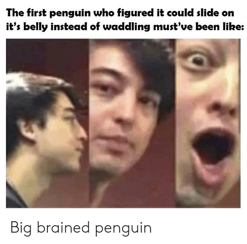 Brained: The first penguin who figured it could slide on  it's belly instead of waddling must've been like: Big brained penguin
