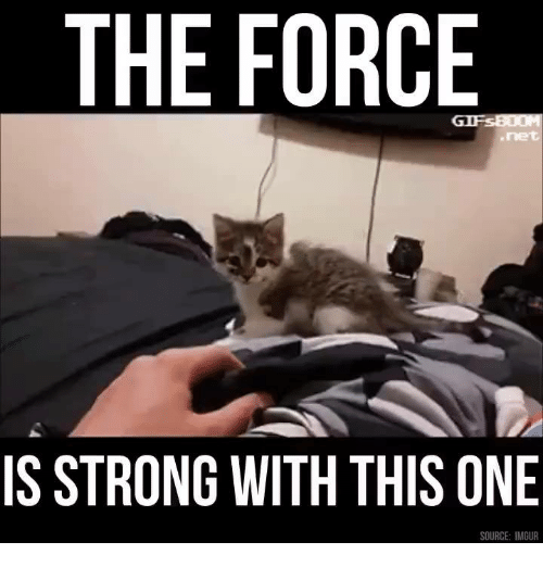 Force Is Strong: THE FORCE  IS STRONG WITH THIS ONE  SOURCE: IMGUR