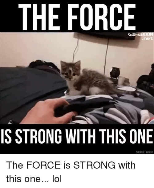 Memes, Imgur, and Strong: THE FORCE  IS STRONG WITH THIS ONE  SOURCE: IMGUR The FORCE is STRONG with this one... lol