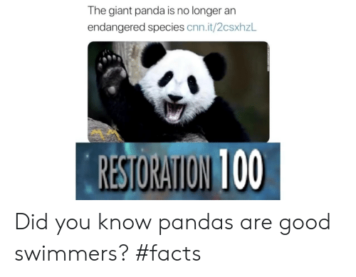 giant panda: The giant panda is no longer an  endangered species cnn.it/2csxhzL  RESTORATION 100 Did you know pandas are good swimmers? #facts
