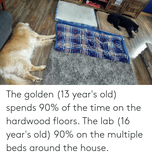 House, Time, and Old: The golden (13 year's old) spends 90% of the time on the hardwood floors. The lab (16 year's old) 90% on the multiple beds around the house.