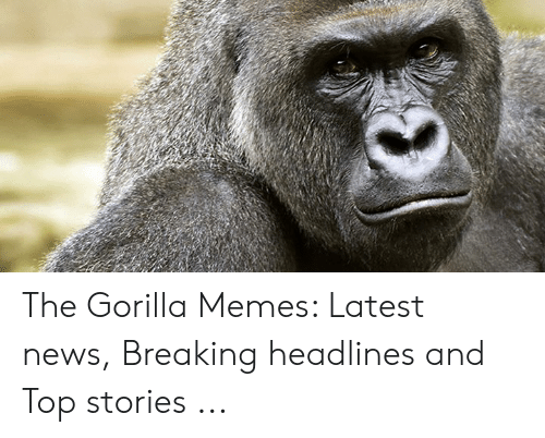 Memes, News, and Gorilla: The Gorilla Memes: Latest news, Breaking headlines and Top stories ...