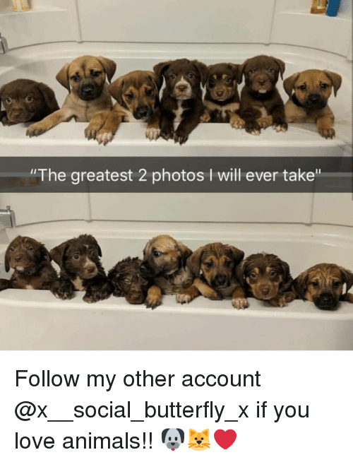 "Animals, Love, and Memes: ""The greatest 2 photos I will ever take"" Follow my other account @x__social_butterfly_x if you love animals!! 🐶🐱❤"