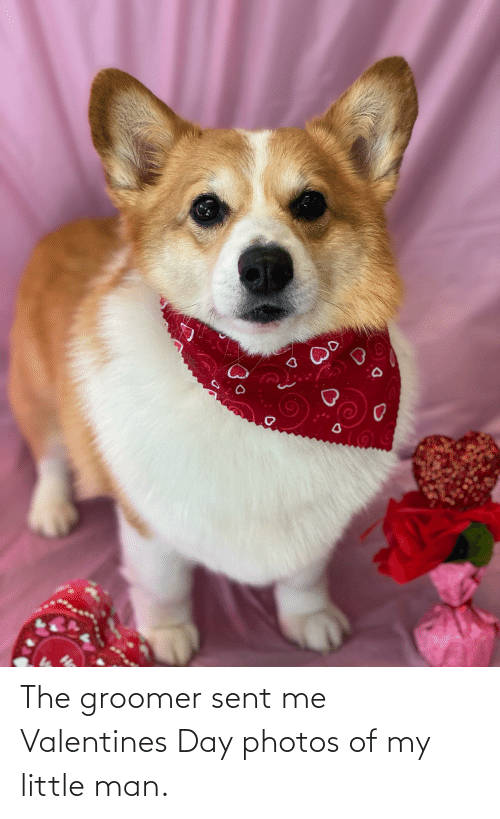 man: The groomer sent me Valentines Day photos of my little man.