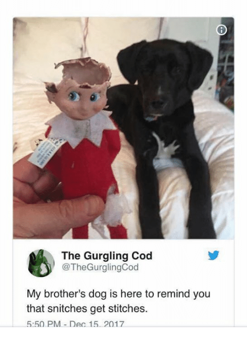 Stitches: The Gurgling Cod  @TheGurglingCod  My brother's dog is here to remind you  that snitches get stitches.  5:50 PM-Dec 15. 2017
