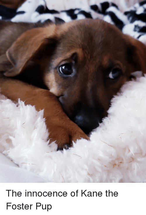 Innocence: The innocence of Kane the Foster Pup