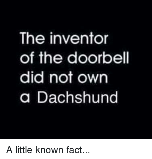 dachshunds: The inventor  of the doorbell  did not own  a Dachshund A little known fact...