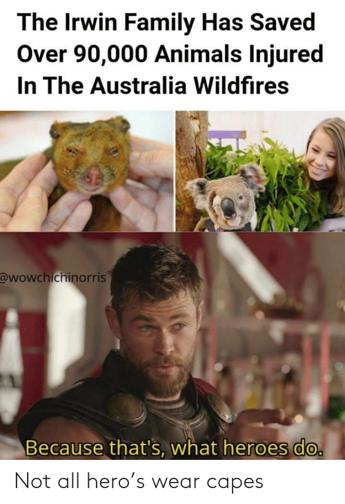 Thats What: The Irwin Family Has Saved  Over 90,000 Animals Injured  In The Australia Wildfires  @wowchichinorris  Because that's, what heroes do. Not all hero's wear capes