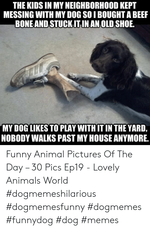 messing: THE KIDS IN MY NEIGHBORHOOD KEPT  MESSING WITH MY DOG SOI BOUGHT A BEEF  BONEAND STUCKITINAN OLD SHOE  MY DOG LIKES TO PLAY WITHIT IN THE YARD,  NOBODY WALKS PAST MY HOUSE ANYMORE, Funny Animal Pictures Of The Day – 30 Pics Ep19 - Lovely Animals World #dogmemeshilarious #dogmemesfunny #dogmemes #funnydog #dog #memes