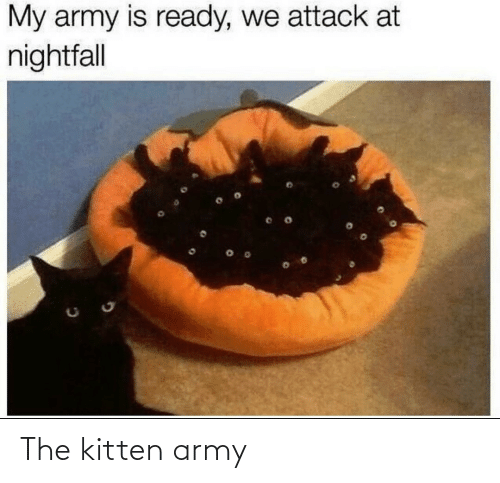 kitten: The kitten army
