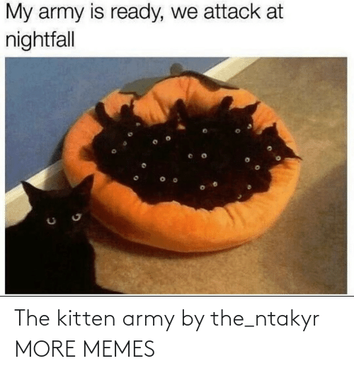 kitten: The kitten army by the_ntakyr MORE MEMES