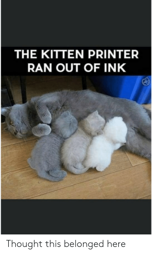 ink: THE KITTEN PRINTER  RAN OUT OF INK Thought this belonged here