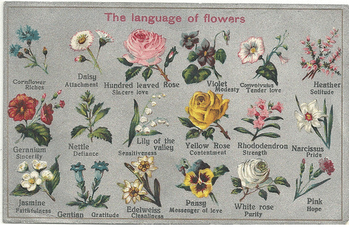 Messenger: The language of flowers  Attachment Hundred leaved aose  Daisy  wH  Heather  Solitude  Violet Convolyalus  Cornflower  odesty Tender lore  Sincere love  i Yellow Rose Riododendron Narcssdis  Nettle  Pride  Geranium  Sincerity  ContentmentStrength  DefianceSeasitiyeness  Pansy  Messenger of tove  Pink  Hope  Jasmine  atsthilness Gentian Gratitude Clesnliness  Edelweiss  Purily