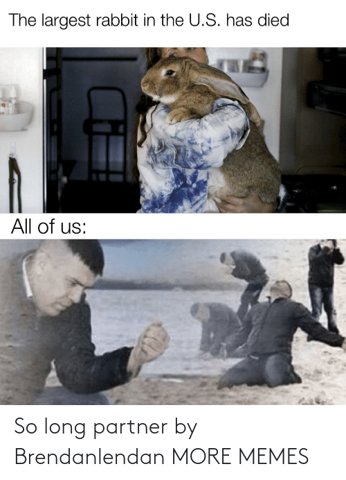Partner: The largest rabbit in the U.S. has died  All of us: So long partner by Brendanlendan MORE MEMES